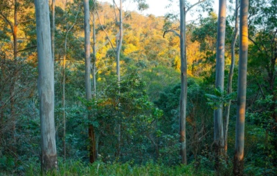 10 Types of Australian Hardwood Timber Species